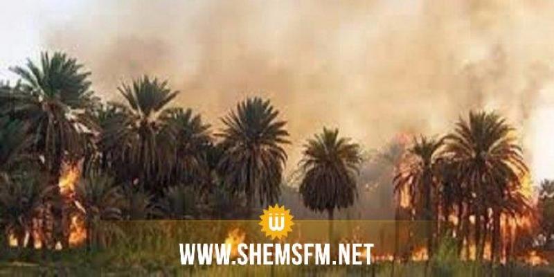 توزر: السّيطرة على حريق في واحة حامة الجريد تسبب في حرق جزئي لـ75 من أصول النخيل