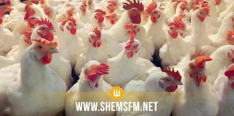 المهدية: بيع  كمية كبيرة من الدجاج يُشتبه في إصابتها بالسالمونيلا