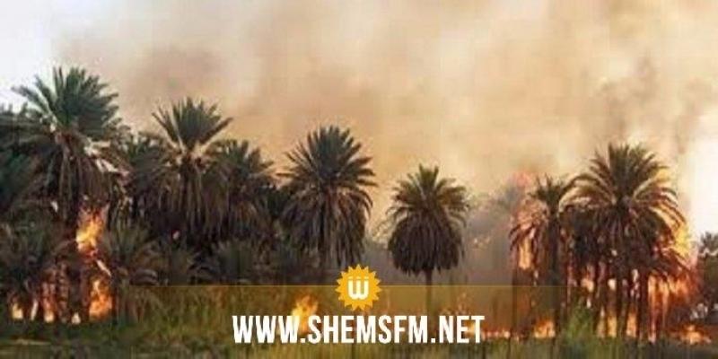 توزر: إخماد حريق تسبب في حرق جزئي لنحو 350 من أصول النخيل