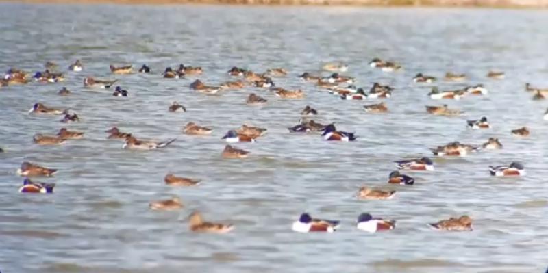جربة: رصد صنف من الطيور المهدد بالانقراض عالميا في الجزيرة