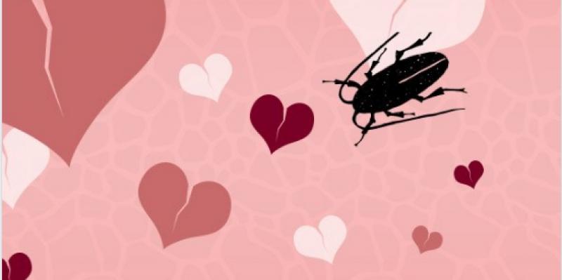 Saint-Valentin : un zoo propose de donner à un cafard le nom d'un ex