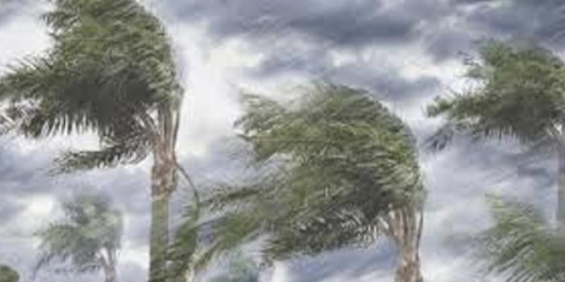 التقلبات الجوية: وزارة الفلاحة تحذّر الفلاحين