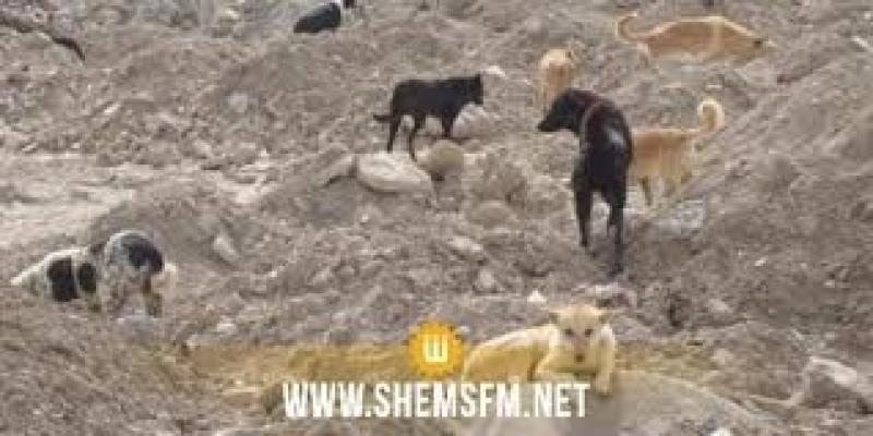 وزارة الشؤون المحلية تنفي إصدار قرار بإبادة الكلاب السائبة والقطط للوقاية من انتشار الفيروسات
