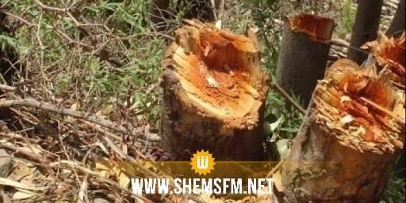 عمرها 300 سنة ومهددة بالانقراض: قطع 400 شجرة زان في عين دراهم