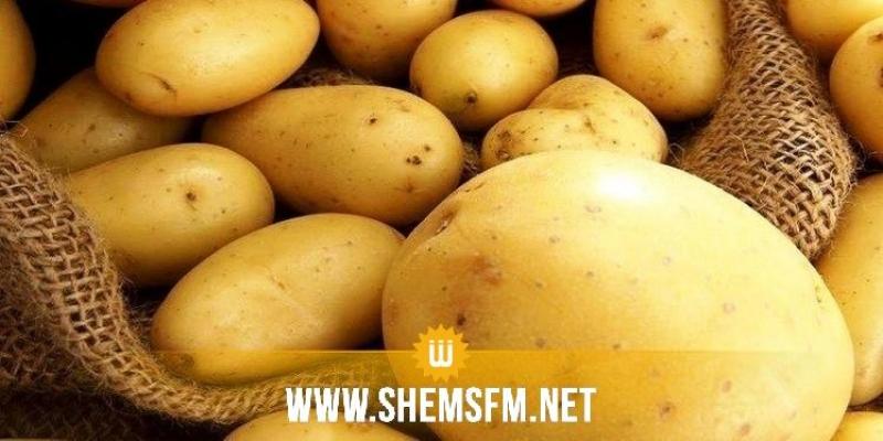 توقعات بإنتاج 300 ألف طن من البطاطا في ماي وجوان