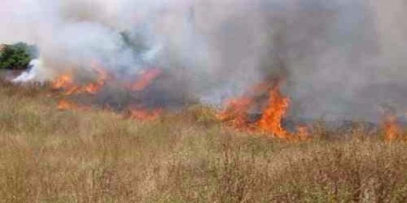 القصرين : حريق بضيعة فلاحية يأتي على مساحة هامة من نبتة الحلفاء