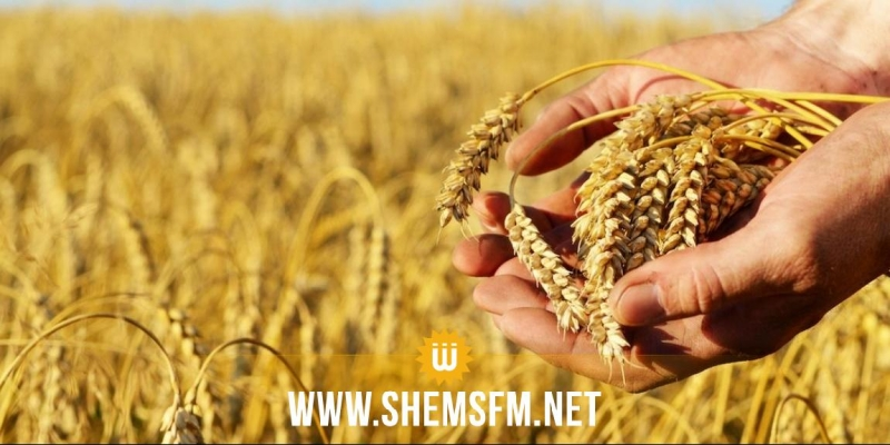 وزارة الفلاحة تتوقع صابة متوسطة من الحبوب هذا العام في حدود 15،7 مليون قنطار