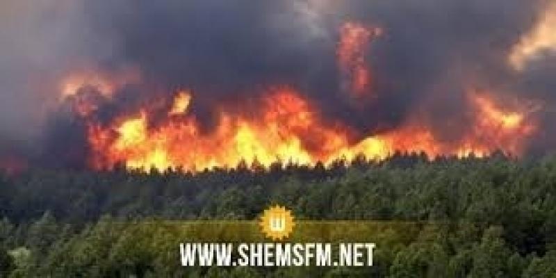 بوقرنين: حريق يلتهم 4 هكتارات مـن الأشجار الغابية بجبل 'نينو'