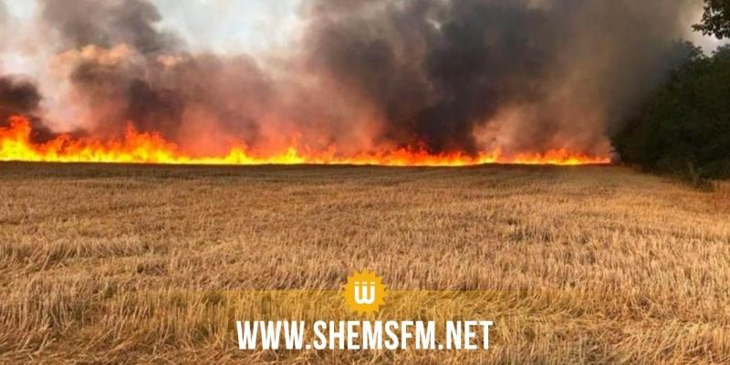 باجة: النيران تلتهم أكثر من 16 هكتارا من مزروعات القمح