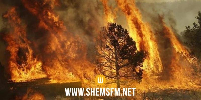 الكاف: 12 شاحنة إطفاء و6 مراكز متقدمة لمجابهة الحرائق