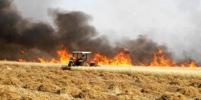 الكاف: السيطرة على حريق نشب بمساحة للحبوب في ساقية سيدي يوسف
