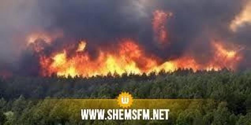 إندلاع حريق هائل بغابات الكاف