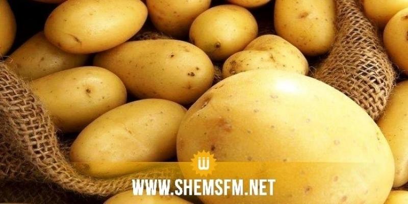 المنستير: افتتاح مركز لقبول البطاطا بالمكنين لمساعدة الفلاحين وتكوين مخزون تعديلي
