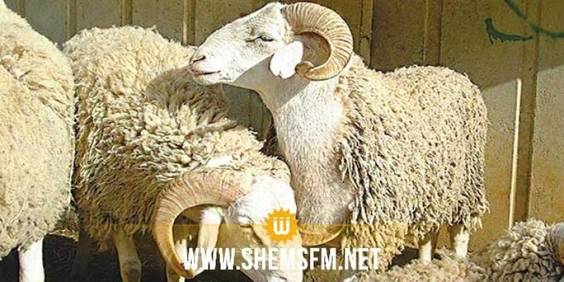 أضاحي العيد: توفر 1 مليون و500 ألف خروف والاسعار المرجعية المقترحة بين 5ر11 د و 5ر12 د للكلغ