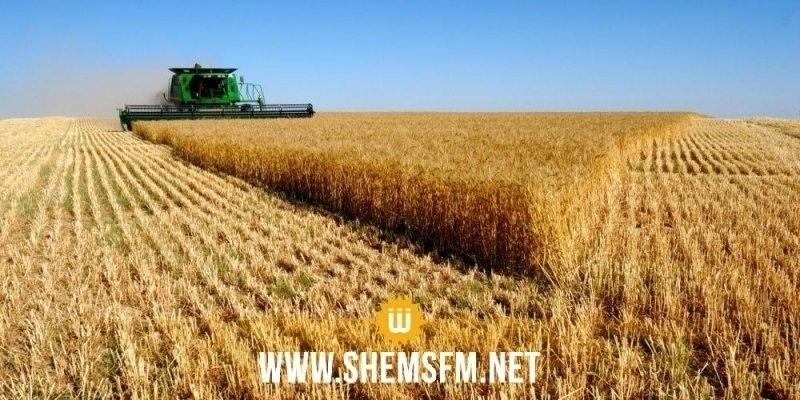 باجة: تحصيل 2.2 مليون قنطار من الحبوب بعد تقدم موسم الحصاد بنسبة 80 %