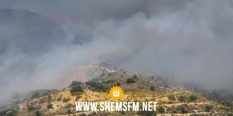 منوبة: إخماد حريق أتى على أكثر من 20 هكتار من غابة شعراء بجبل عمار بدوار هيشر وبوخروبة بشباو