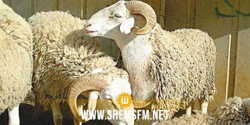Un point de vente de moutons de sacrifices au kilo sera ouvert bientôt
