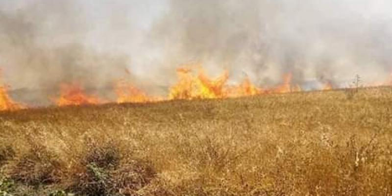 بنزرت: حريق بمنطقة عين داموس يأتي على نصف هكتار من الغابة الشعراء