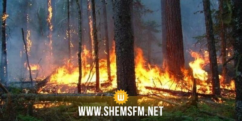 سليانة: السيطرة على حريق نشب ب8  نقاط مختلفة بغابة صنوبر