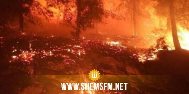 القصرين: 4 حرائق في المناطق العسكرية المغلقة بالشعانبي والسلوم وسمامة ومغيلة