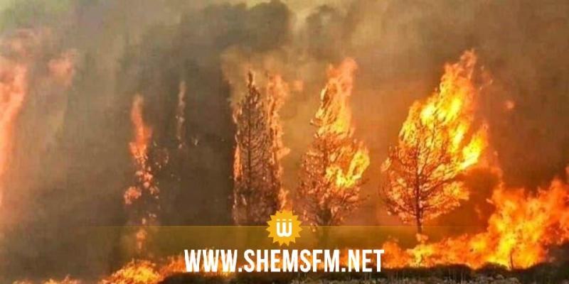 الكاف: اندلاع حريق بجبل 'الطوال' بساقية سيدي يوسف