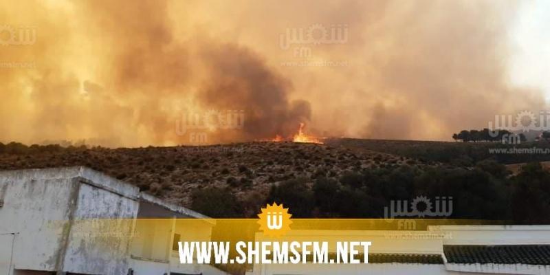 إدارة الغابات: 'الوضع تحت السيطرة وكل الحرائق تم إطفاؤها'