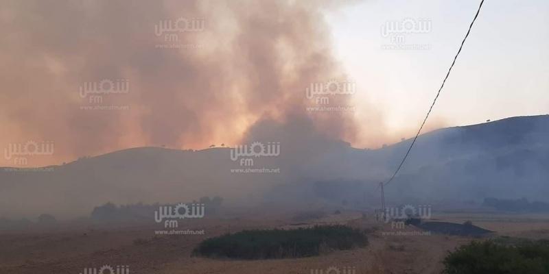 إدارة الغابات: 'ما حدث من حرائق ارهاب في حق الطبيعة وسيتم تسليط أقصى العقوبات على المتهمين'