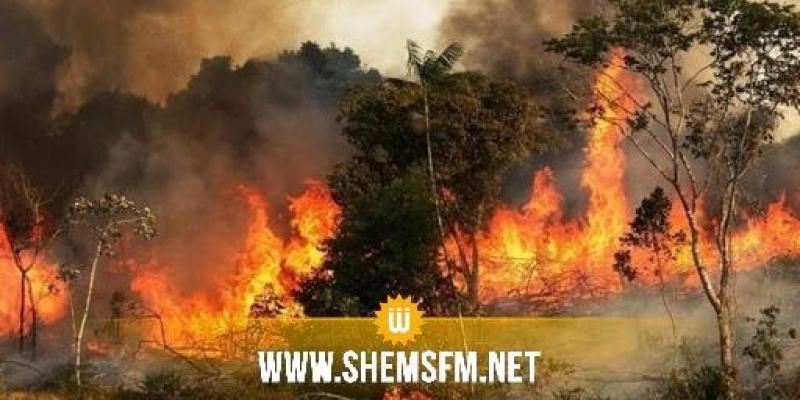 بنزرت: تسخير حوالي 100 عون من الحماية المدنية وإدارة الغابات لإخماد حريق جبل الناظور