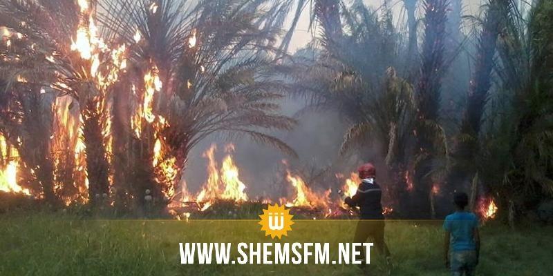 رغم الإجراءات الاستباقية المُتّبعة: ارتفاع عدد الحرائق في الواحات بتوزر