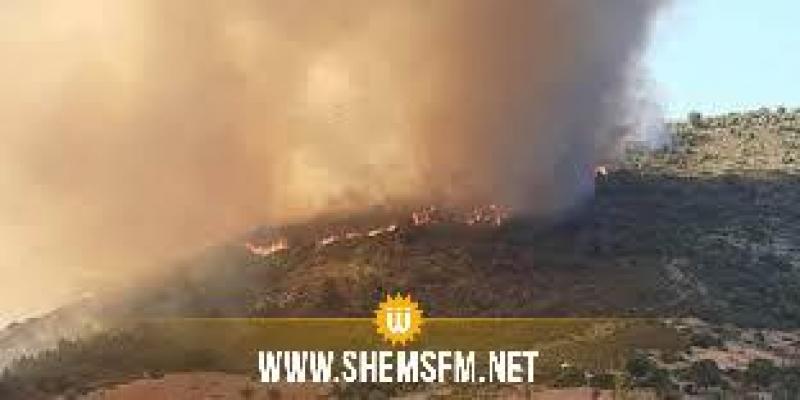 اندلاع حريق هائل بالغابة الشعراء لمنطقة دار الجنة ببنزرت الجنوبية
