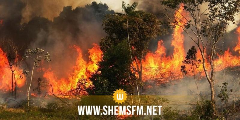 نشوب 9 حرائق في جندوبة: السيطرة على نسبة 85 بالمائة منها