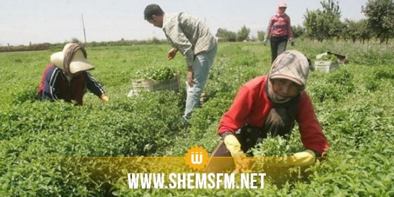 أكثر من 1.5 مليون تونسي يشتغلون في العمل غير المنظم