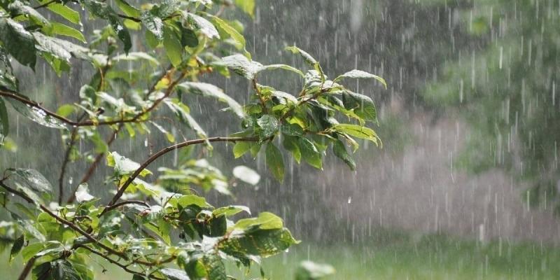 اليوم: أمطار رعدية والحرارة في انخفاض