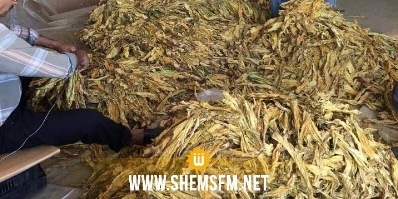 الوكالة الوطنية للتبغ والوقيد تنطلق فى زراعة التبغ الفرجيني