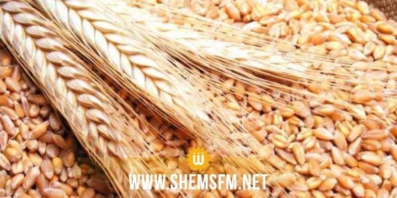 وزارة الفلاحة: الشروع في توزيع كميات من البذور الممتازة