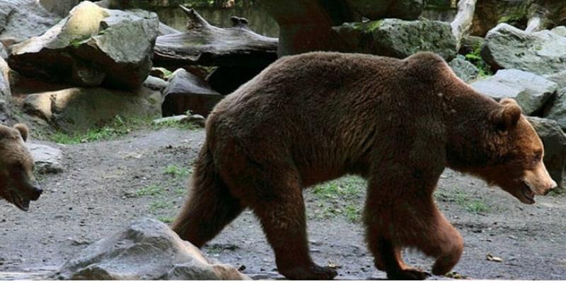 Chine: des ours tuent un soigneur sous les yeux des visiteurs d'un zoo