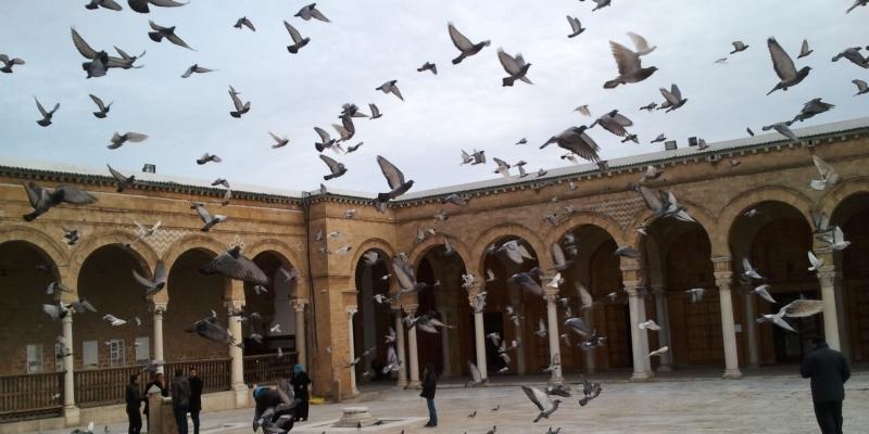 إصابة 73 إطارا مسجديا بكورونا