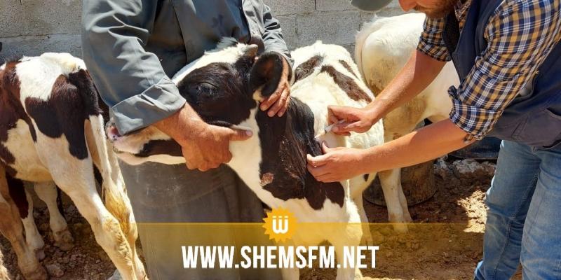 وزيرة الفلاحة تدعو النواب إلى دعم صندوق الصحة الحيوانية