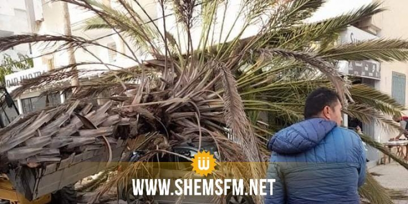 نابل: سقوط نخلة يتسبب في أضرار مادية وإصابة مواطن