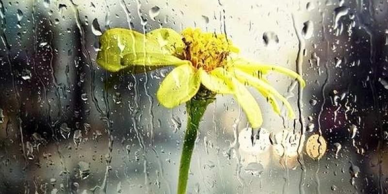 اليوم: الحرارة في انخفاض مع أمطار غزيرة