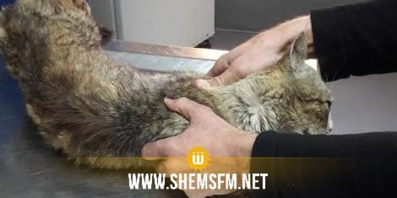 المنستير: البحث في موضوع تعذيب فرنسي لقطط و سلخها حية