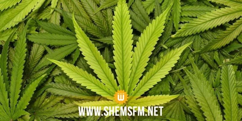 ولاية نيو جيرسي الأمريكية تشرع الماريجوانا