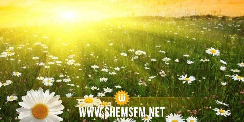اليوم: الحرارة في ارتفاع وهدوء نسبي في الطقس