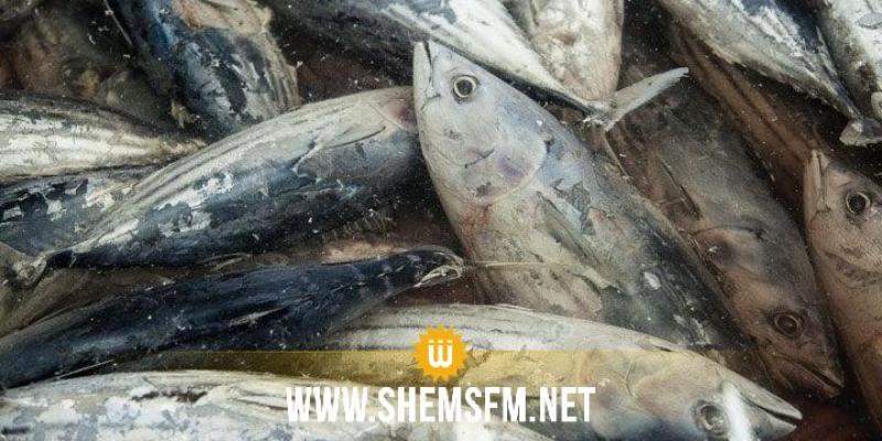 Bizerte : saisie de 500 kg de thon avarié