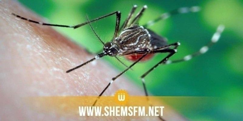 المديرة العامة للنظافة: 'سوء الأحوال الجوية حال دون استكمال برنامج مداواة الناموس بالطائرات'