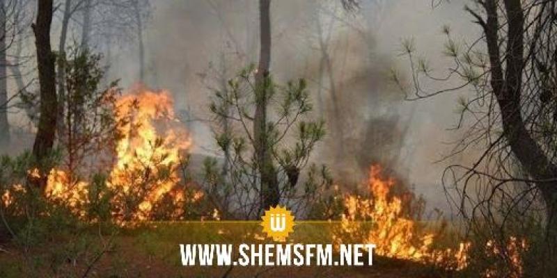 وزارة الفلاحة: عقوبات حرق الغابات والمزارع تصل حدّ الإعدام