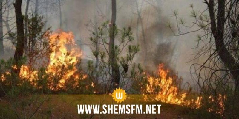 Les responsables des incendies des forêts sont passibles de sanctions pouvant atteindre la peine capitale