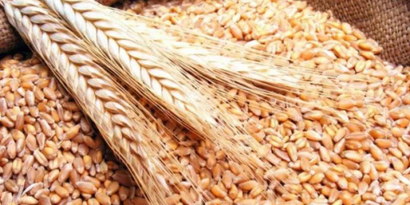 Ministre de l'Agriculture: la récolte des céréales sera meilleure que celle de 2020