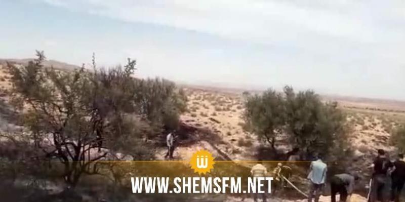 سيدي بوزيد: حريق يلتهم 30 شجرة زيتون