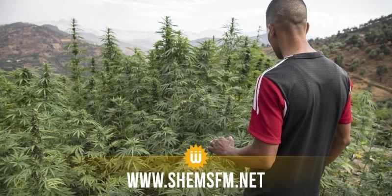 Maroc : la légalisation thérapeutique du cannabis approuvée par le parlement